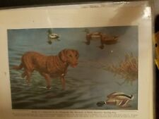 Walter A. Weber Chesapeake Bay Retriever bookplate 1947 National Geographic Mag