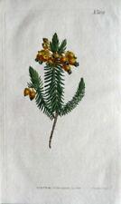 Vintage Botanical Antique (Pre-1900) Art Prints