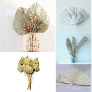 Dried Flower Palm Fan Leaf Natural Plant DIY Art Wall Wedding Party Home Decor