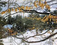 1950s Vintage 11x14 NATURE LANDSCAPE Winter Snow Forest Photo Art ELIOT PORTER