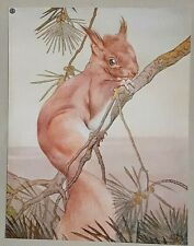 RED SQUIRREL - 1911 Print By DETMOLD