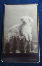 1860S RARE DANBURY CT DOG LAYING ON TABLE CDV PHOTOGRAPH by SANFORD
