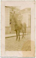 WW1  .Carte-Photo .  Soldat Français . Militaire à Cheval . Military Horse