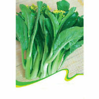 200X Seeds Canton Bok Choy Chinese Cabbage Wong Bok Seed Green Vegetable Garden
