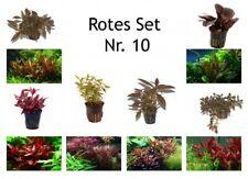 plantes Set 6 beau rouge TROPICA Pot de plantes aquariumpflanzenset nr.10