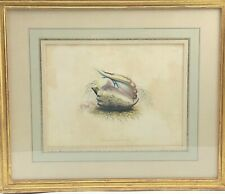 Fine Gold Leaf Framed Antique Hand Colored Sea Shell Conchology Print 98 NR KPB