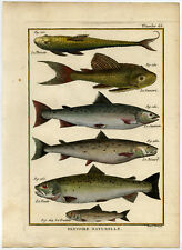 Antique Fish Print-PLECO-BROWN TROUT-ATLANTIC SALMON-LORACARIID-Bonnaterre-1788