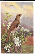 Bird J Salmon Single Collectable Animal Postcards