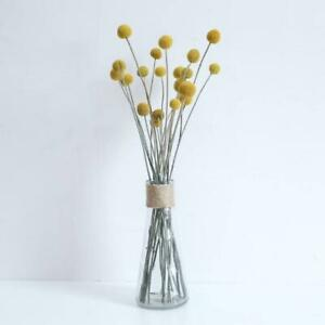 Australian Native Natural Dried Craspedia Billy Button Flower Stem - NATURAL ...