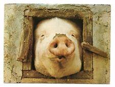Pig Face - Pig Postcard