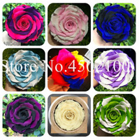 200 PCS Seeds Flowers Bonsai Rainbow Roses Plants Perennial Garden Vary Colors N