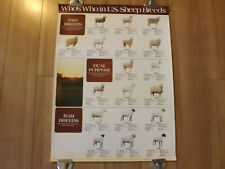 Rare Who's Who in U.S. Sheep Breed Educational Double Sided Poster [T05]