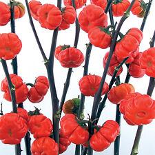 Pumpkin On A Stick Pumpkin Pepper Seeds DRY THEM FOR CRAFTS -COMB S/H