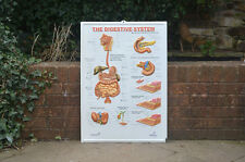 vintage educational school poster old  teaching diagram body chart -FREE POSTAGE