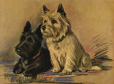 CAIRN TERRIER AND SCOTTIE CHARMING DOG GREETINGS NOTE CARD TWO DOGS SITTING