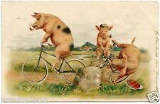 Héléna MAGUIRE non signé . Cochons humanisés à vélos. Humanized pigs