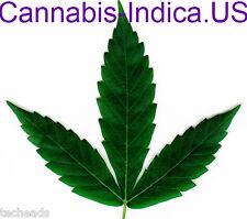 CANNABIS-INDICA  American CANNABIS Niche Domain Name for sale Cannabis-Indica.US