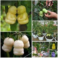 10 Stück Bio Baby Ginseng Obst Samen Saatgut Baum Seeds Sapodilla Solanum