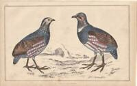 LARGE-FOOTED PARTRIDGE. Hand-Coloured ANTIQUE BIRD PRINT.Natural History 1850