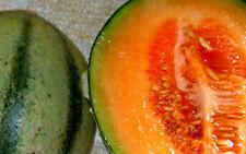 MELONEN  die besten Sorten als MISCHUNG 20 Samen zuckersüß für Topf, Balkon,
