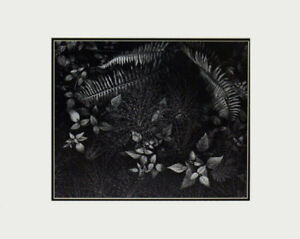 Ansel Adams Leaves- Mills College LG Matted