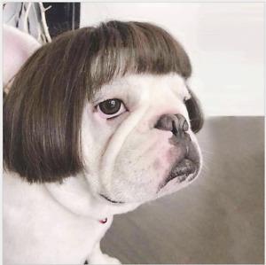 Pet Dog Cat Puppy Cloth Funny Cute Custume French Bulldog Corgi Teddy Bichon
