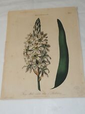 Ornithogalum 1820 Hand Colored Copper Engraving J.Pass  8 x 10.5