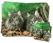 Blue Norwegian Forest Cats Twin 2x Placemats+2x Coasters Set in Gift Bo, AC-55PC