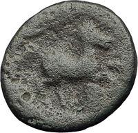 PELLA in MACEDONIA 148BC RARE R1 Authentic Ancient Greek Coin ZEUS & BULL i62606