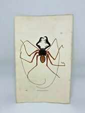 Crab Spider - 1783 RARE SHAW & NODDER Hand Colored Copper Engraving