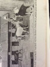 a1l ephemera 1917 ww1 picture american ladies red cross society w a a c