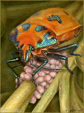 © ART - Harliquin Realism Insect Bug Original Illustration Artist print by Di