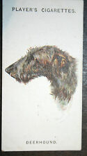 Scottish Deerhound   1920's Vintage Picture Card  VGC