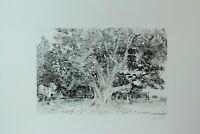 Herbert Grunwaldt Der große Baum Radierung signiert Landschaft Park