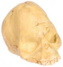 Abollado cráneo: muñeca casa miniatura Cranium Ideal Para Halloween, Cementerio