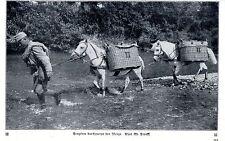 Österreichische Soldaten durchqueren den Isonzo  Historische Aufnahme von 1915