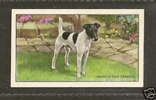1936 Uk Dog Art Full Body Gallaher A Cigarette Card Smooth Haired Fox Terrier