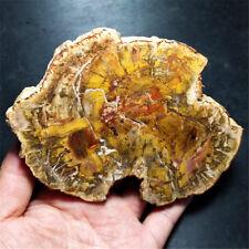 402g Natural Petrified Wood Fossil Crystal Polished Slice Madagascar  18071204