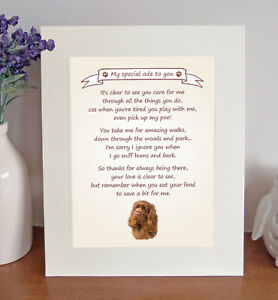 Sussex Spaniel Thank You FROM THE DOG 8 x 10 Picture/10x8 Print Fun Novelty Gift