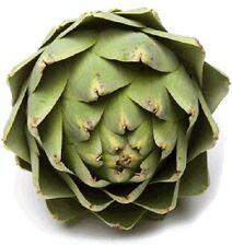 75 GREEN GLOBE ARTICHOKE Cynara Scolymus Vegetable Seed