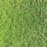 Empire Zoysia Grass- 56 gr-1/8 lb seeds