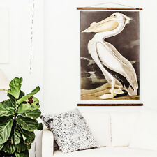 American Pelican Zoological Botanical Chart Wall Hanging by Erstwhile