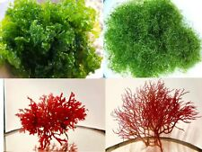 Refugium in a bag 1/4 lb. Macro Algae pack Caulerpa Gracilaria Chaeto