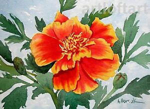 Marigold  FLOWER  ACEO Art Card Print by A Borcuk  2.5x3.5