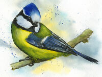 Blue Tit Wildlife PRINT from an original Watercolour Painting