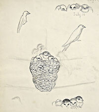 Dorothy Eaton Drawing (XLII) Birds With Chicks in a Nest