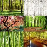 Vliestapete Tapete Japanischer Garten Birkenwald Herbst Wald Wiese Fototapete