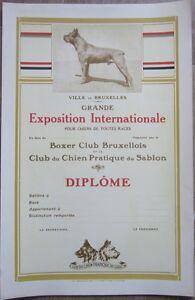 1930s Poster/Diploma: Belgian Kennel/Dog Club - Boxer Dog