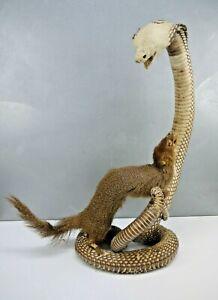 CREEPY Vintage SNAKE King COBRA Mongoose Battle MOUNT Taxidermy Rikki Tikki Tavi