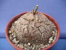 research.unir.net Home & Garden Garden & Patio Dioscorea ...